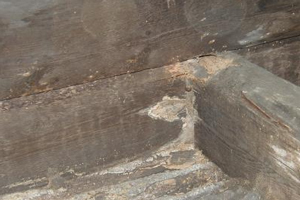 Dry rot in roof timbers