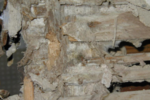 Dry rot in timber stud partition